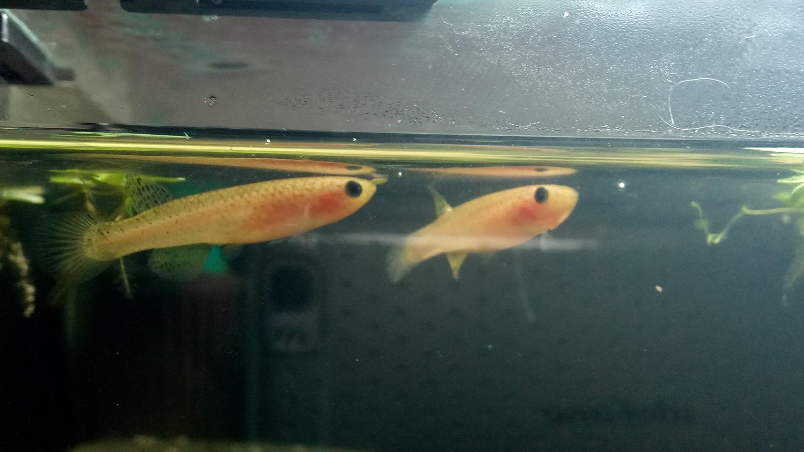 20l pour 3 cl de poisson :D A0VOtuX1Qq